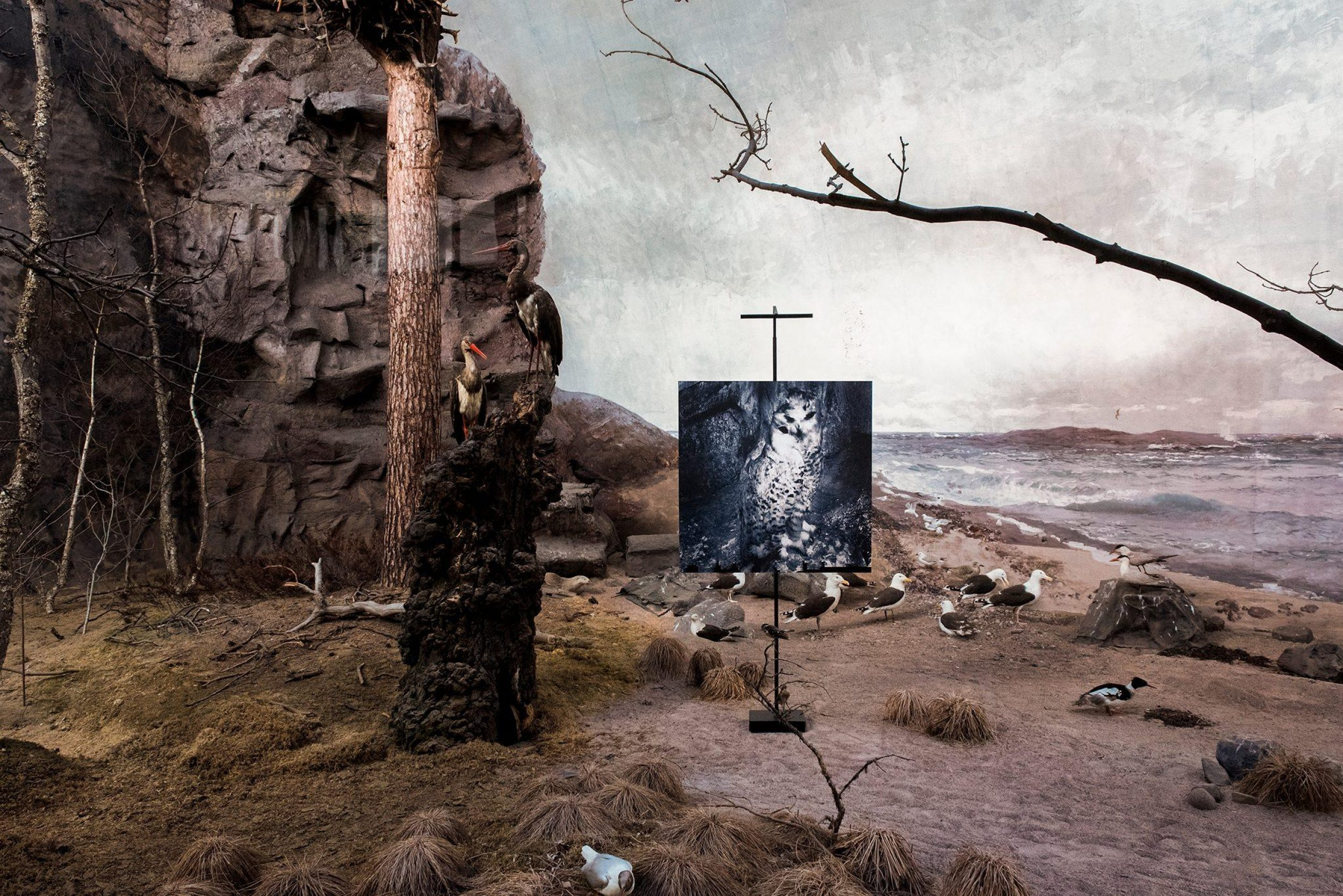 Biologiska Museet, Stockholm 2017  –  Naturmystik